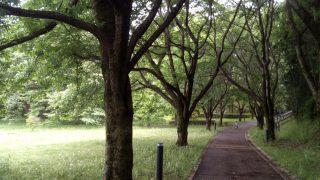 ちょっとした異空間♡情報の森って素敵な所♡